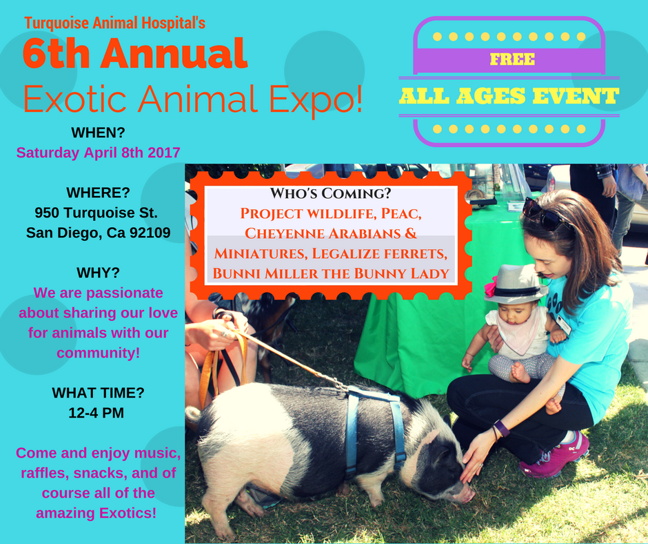 6th Annual Exotic Animal Expo - Veterinarian and Animal