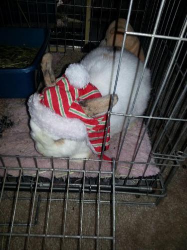 Bailey S. Christmas Photo