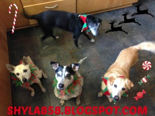 Dr. Reeds Pack Christmas Photo