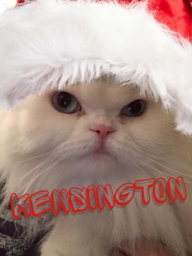 Kensington M. Christmas Photo