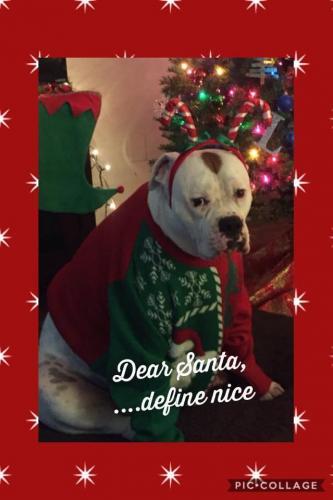 Leo S. Christmas Photo