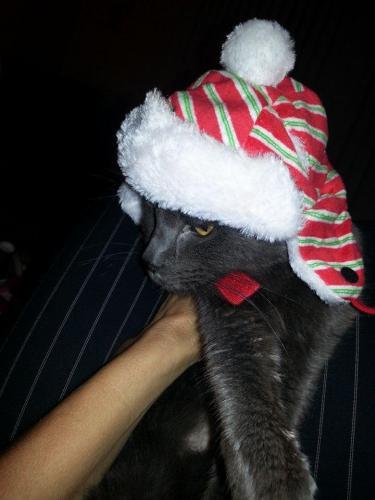 Spike S. Christmas Photo